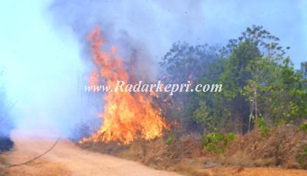 Hutan yang terbakar di kecamatan Toapaya, Kabupaten Bintan.