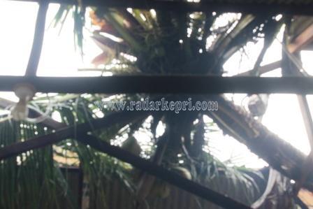 Inilah rumah Jimy di Kampung Wonosari yang terbelah karena ditimpa pohon kelapa yang tumbang akibat angin dan hujan deras.